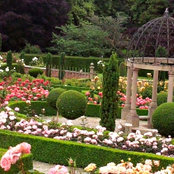 The summer rose gardens